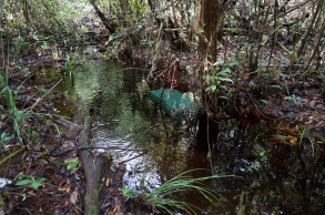 A traditional wire fish trap in a canal in the Sabangau Peat-swamp Forest. Photo by Sara Thornton.