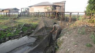 Fish net in the ex-Mega Rice Project area. Fishing in the canals is done through the year. Photo by Sara Thornton