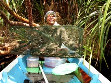 My research assistant, Iwan, with one of our fish traps, a local trap called a tampirai. Fish were quickly measured, counted and released. Photo by Sara Thornton.