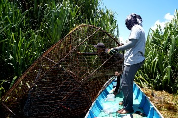 My research assistant (also an experienced local fisherman) checks one of his large fish traps. Photo by Sara Thornton